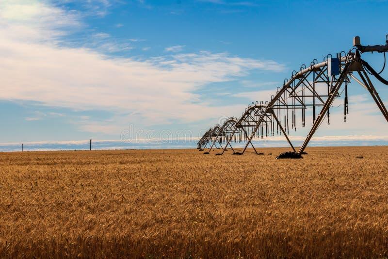 与灌溉供水系统的金黄麦田和与云彩的蓝天 库存照片