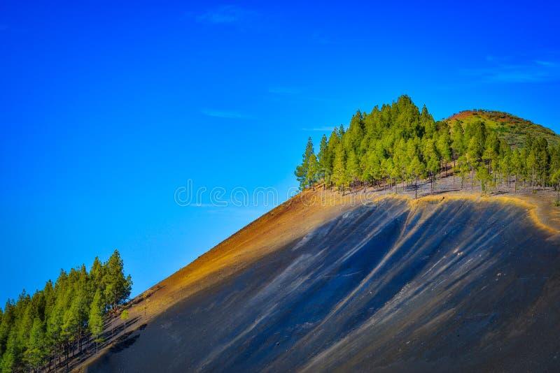 与火山的土壤和杉树的山风景在大加那利岛海岛,西班牙 免版税库存图片