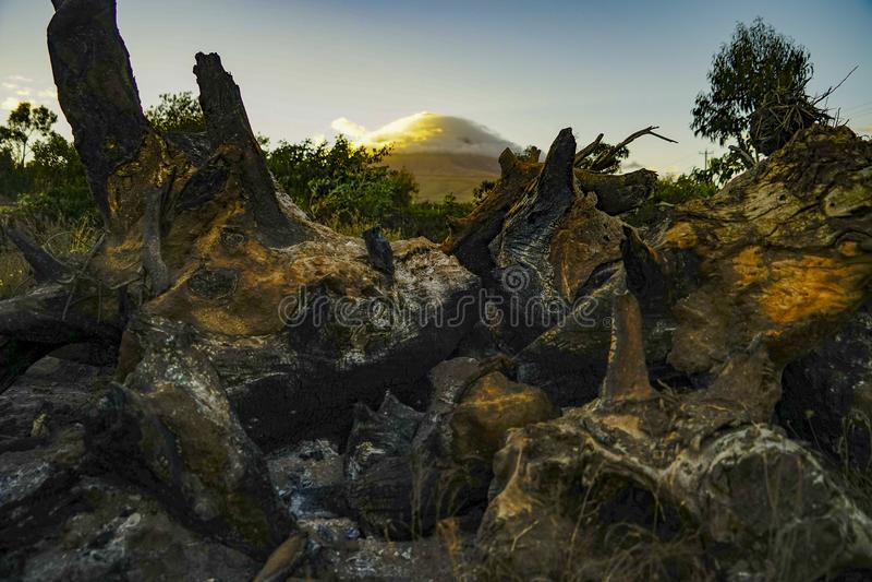与火山背景的被烧焦的木头 免版税图库摄影