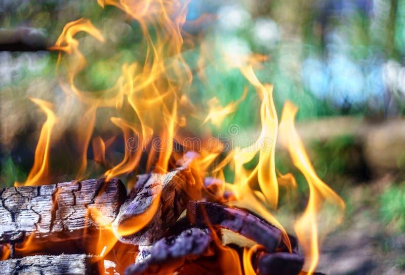 与火焰的营火责骂燃烧在夏天日落在乡下 自然火背景 免版税库存图片