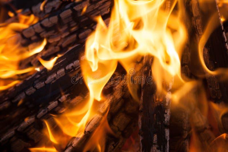 与火焰被烧焦的木头的美好的火 库存图片
