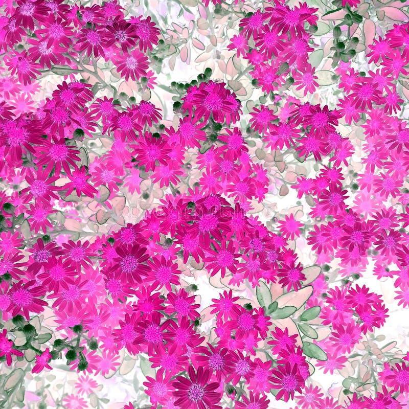 与灰色叶子的桃红色雏菊 免版税库存照片
