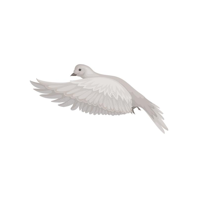 与灰色羽毛的鸠在飞行的行动 出价在天空中 动物区系和鸟类学题材 平的传染媒介象 库存例证