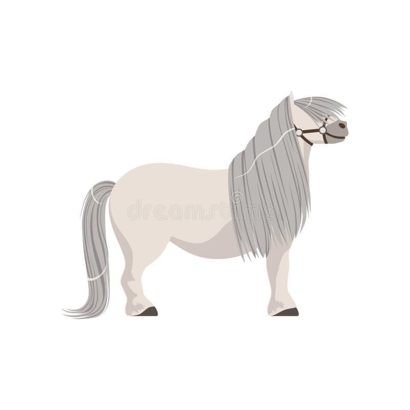 与灰色鬃毛,良种马传染媒介例证的白色小马 向量例证