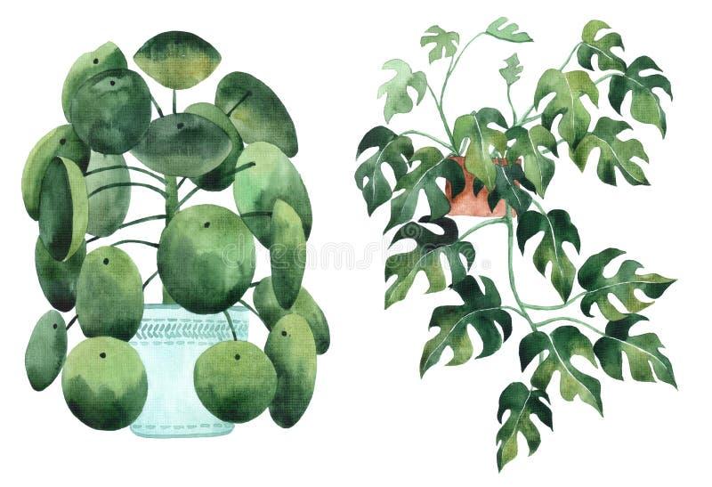 与热带室内植物叶子和叶子的水彩图象  罐的家庭植物 ?? ?? E 向量例证