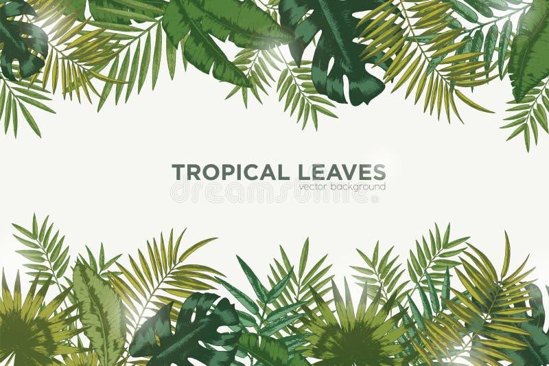 与热带棕榈树、香蕉和monstera绿色叶子的水平的背景  典雅的背景装饰与 皇族释放例证