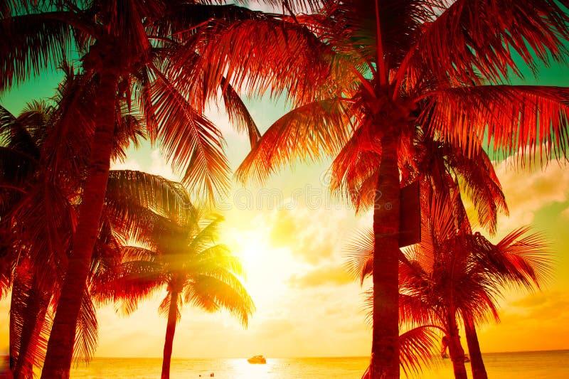 与热带棕榈树的日落海滩在美丽的天空 棕榈和美好的天空背景 旅游业,假期概念背景 免版税图库摄影
