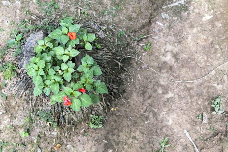 与热带花的被弄脏的自然背景,开花在森林里的偏僻的红色花 免版税库存照片