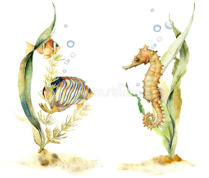 与热带鱼和海象的水彩构成 与海藻的手画水下的花卉例证和 向量例证