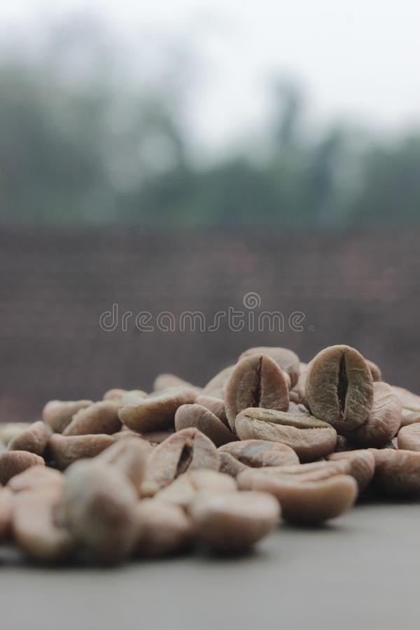 与焦点的咖啡豆背景在咖啡 免版税图库摄影
