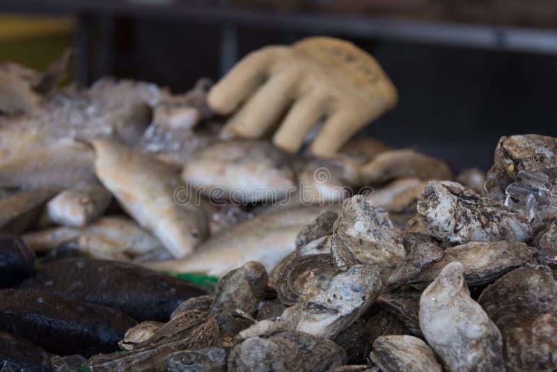 与焦点的海鲜市场在前景的牡蛎 免版税库存图片