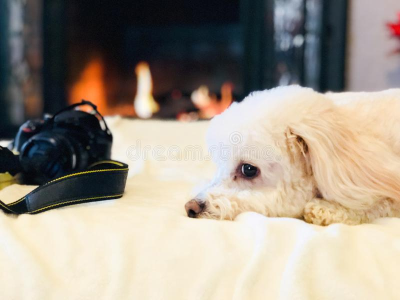 与照相机的休息的狗由它的边 免版税库存照片