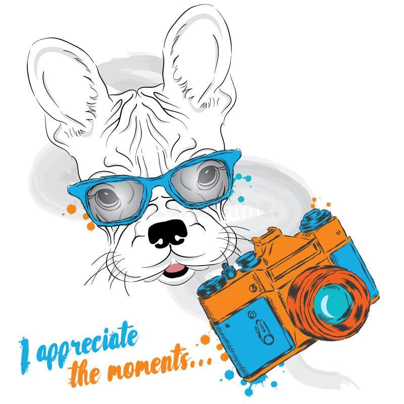 与照相机的法国牛头犬 2个动画片狗例证系列向量 摄影师 导航贺卡的,海报例证,或者印刷品穿衣 皇族释放例证