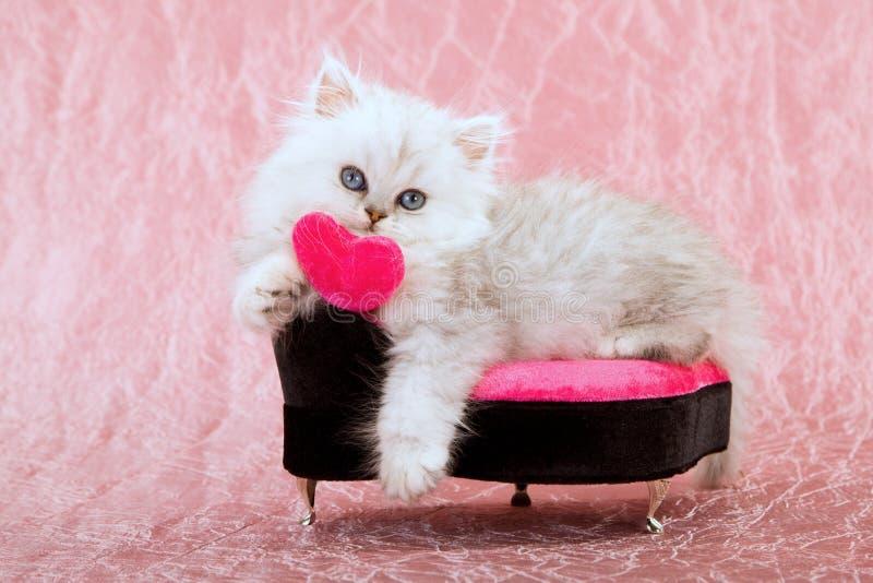 与爱重点的逗人喜爱的小猫 库存照片