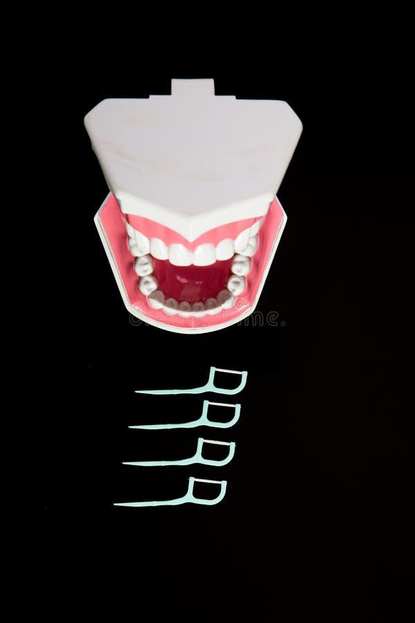 与牙线的牙模型 图库摄影