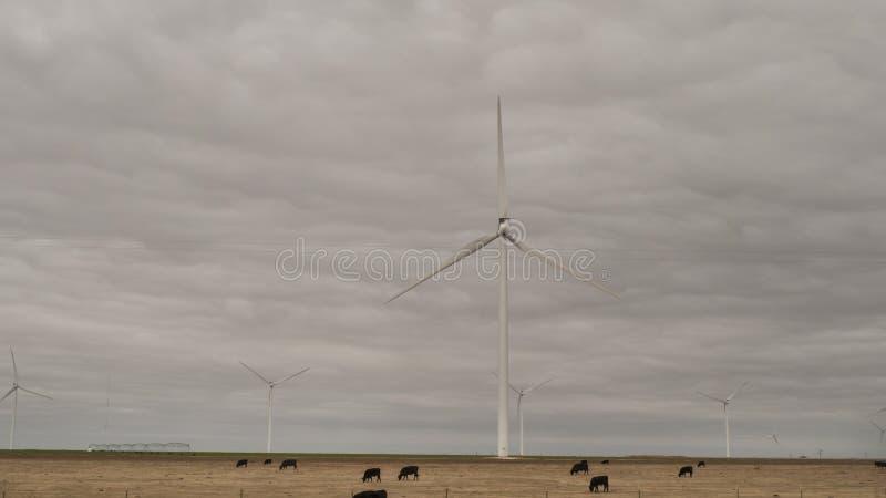 与牛和风轮机的北部得克萨斯风景 免版税图库摄影