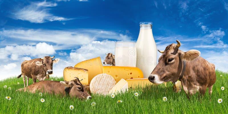 与牛奶瓶和乳酪的母牛在草甸 免版税库存图片