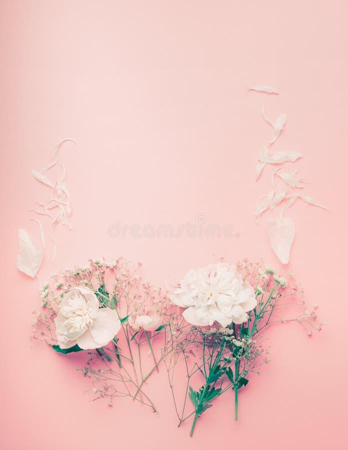 与牡丹和瓣的淡色花框架在桃红色背景 免版税库存图片
