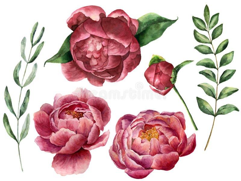 与牡丹和绿叶的水彩花卉集合 与玉树叶子、分支和迷迭香的手画花 库存例证