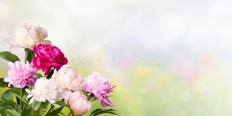 与牡丹的花卉背景 免版税库存照片