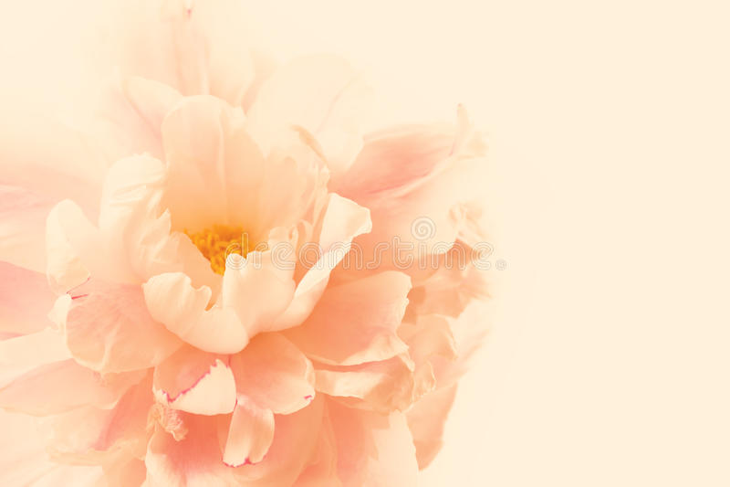 与牡丹花的精美花卉背景 库存照片