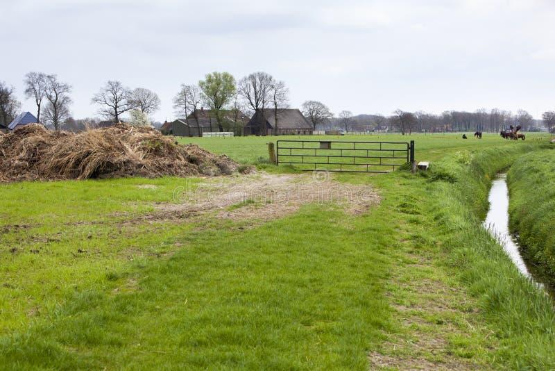 与牧场地和农场的农村风景在Nunspeet 免版税库存图片