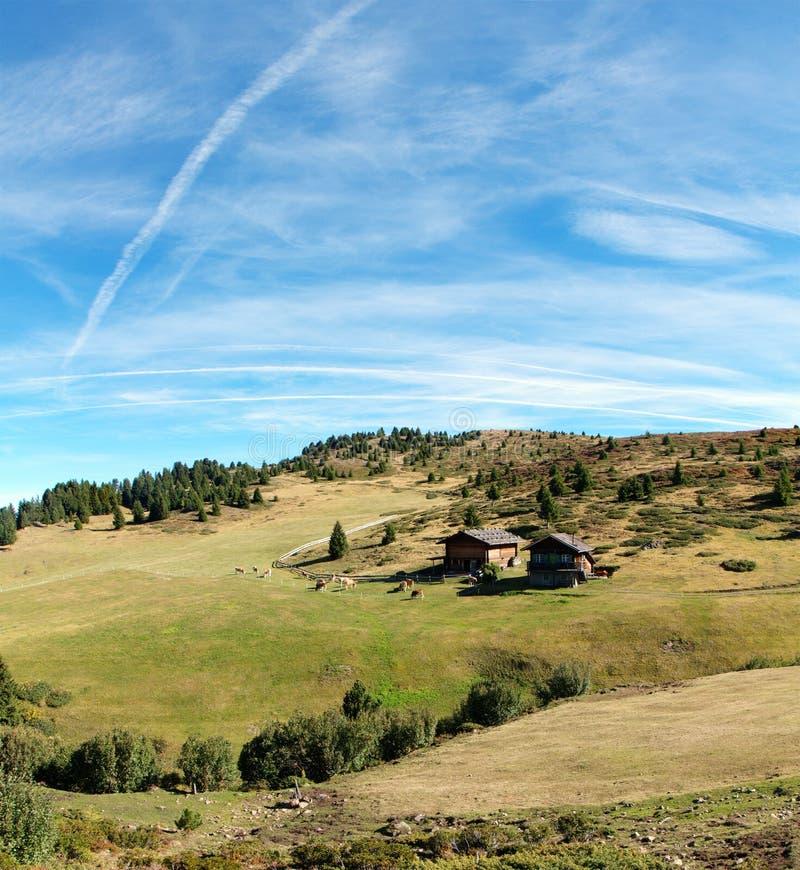 与牧场地的瑞士山中的牧人小屋 库存图片