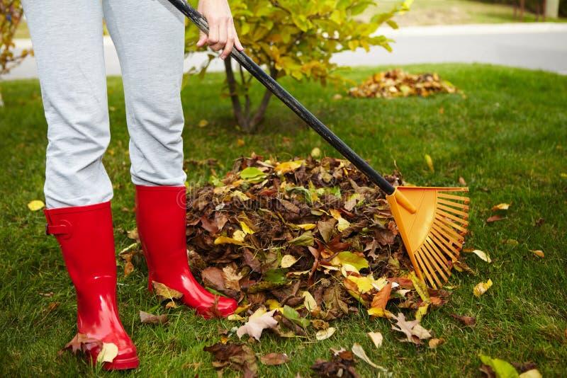 与犁耙的秋天叶子 免版税图库摄影