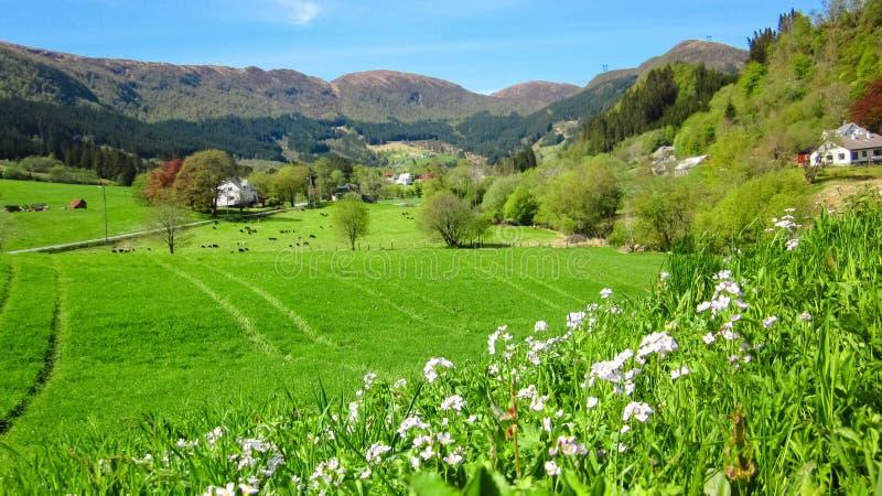 与狂放的桃红色酢酱草的春天风景在绿谷 免版税库存照片