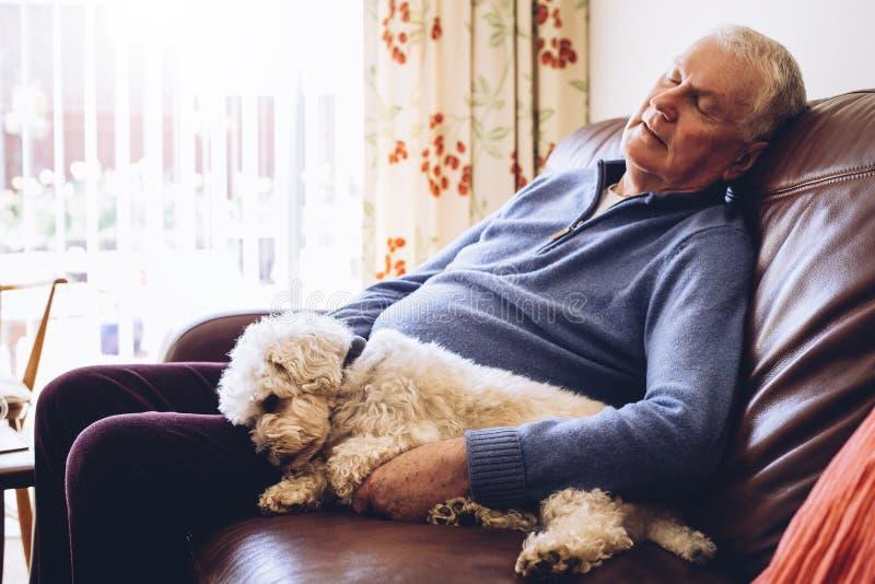 与狗的下午休息 免版税库存照片