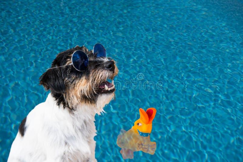 与狗的假日-与玻璃的杰克罗素狗在水 免版税图库摄影