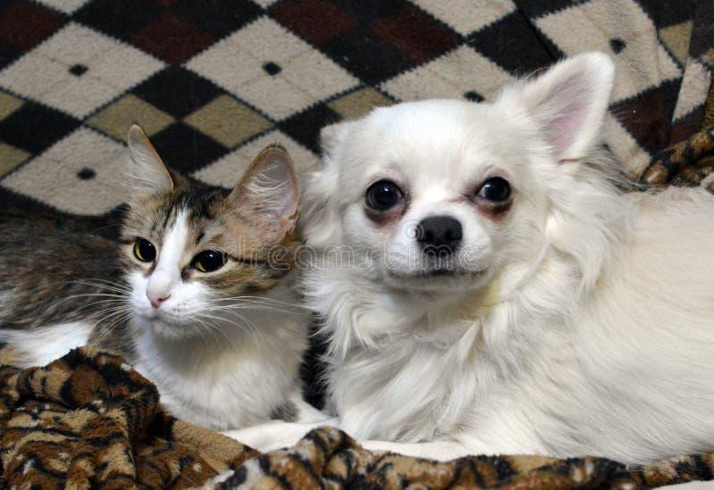 与狗的友谊猫 免版税图库摄影