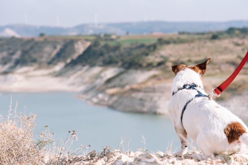 与狗的室外追求概念在坐边缘悬崖和看在谷视图的早晨步行期间 免版税库存图片