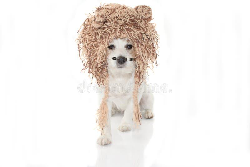 与狮子服装的滑稽的狗万圣夜或狂欢节党的 我 图库摄影