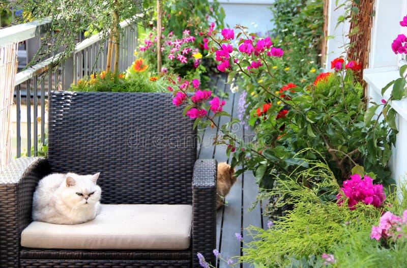 与猫和全部的美丽的大阳台花 免版税图库摄影