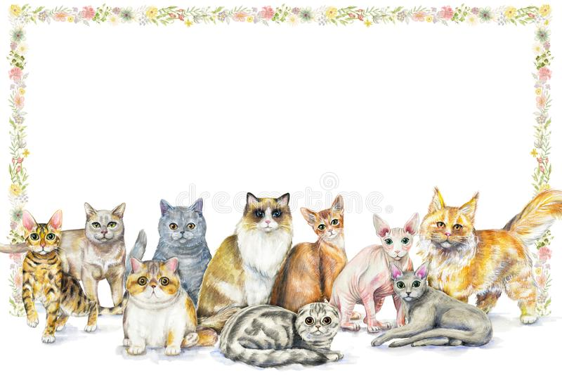 与猫和flo十个不同品种的水彩构成  向量例证