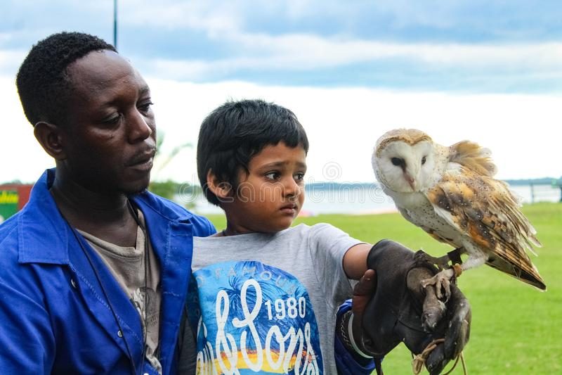与猫头鹰的孩子 库存照片