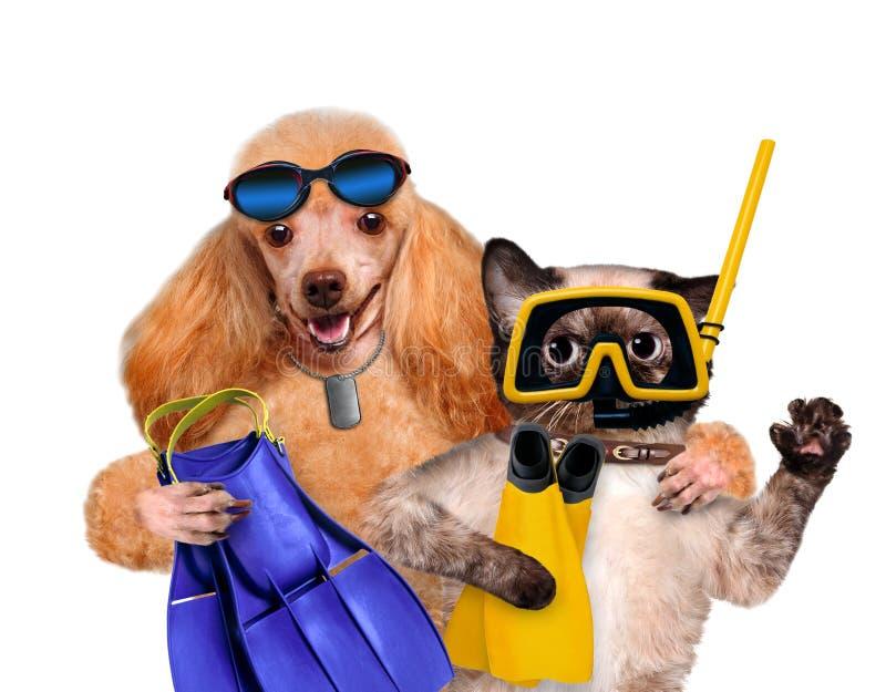 与猫潜水者的狗 图库摄影