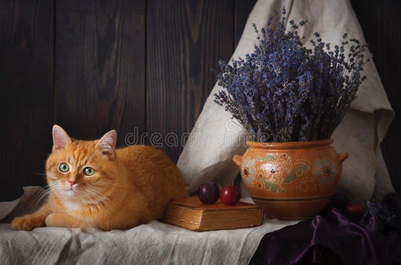 与猫的一幅美丽的静物画和淡紫色花束在桌上的 免版税图库摄影