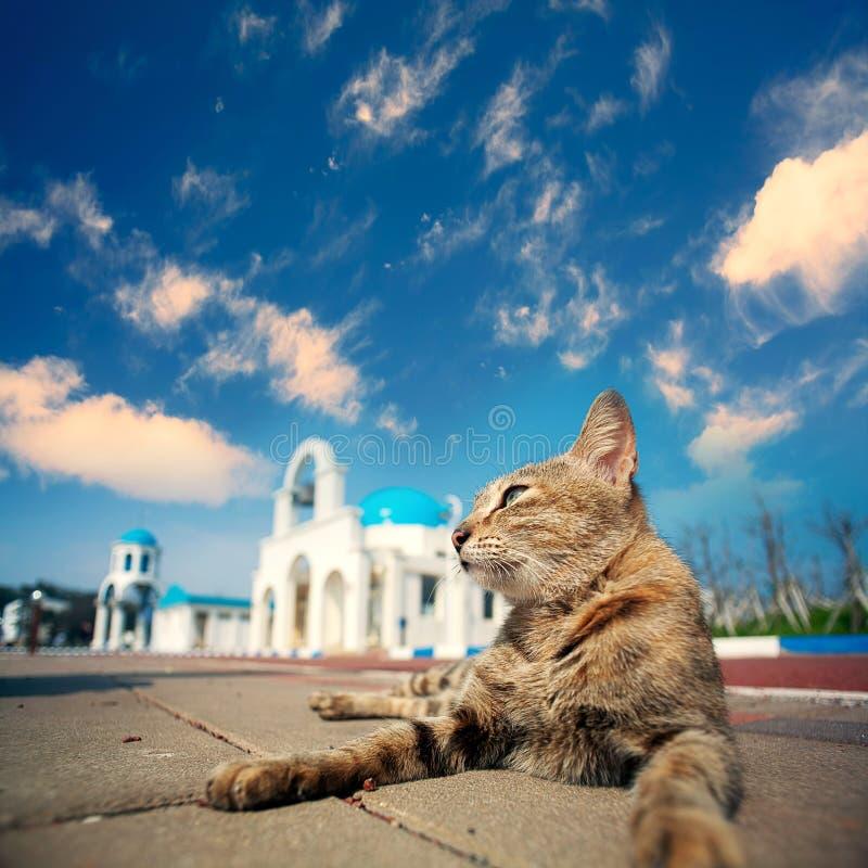 与猫的蓝色和白色教堂钟 图库摄影