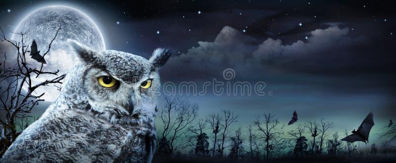 与猫头鹰的万圣夜场面 免版税库存照片