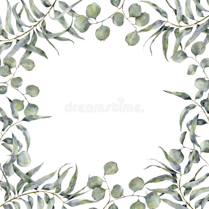 与玉树分支的水彩边界 与银元玉树圆的叶子的手画花卉框架  向量例证