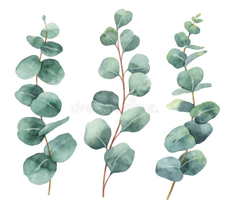 与玉树叶子和分支的水彩手画传染媒介集合 皇族释放例证