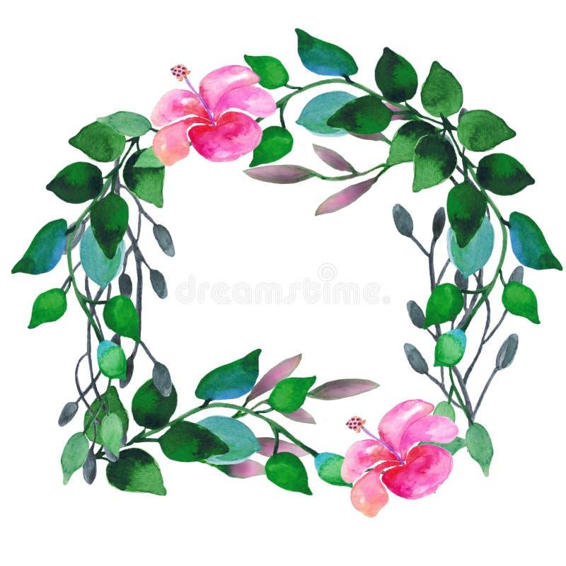 与玉树叶子和花的水彩花圈 皇族释放例证