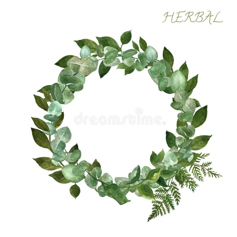 与玉树植物、蕨叶子和森林野生植物的水彩手画圆的边界,隔绝在白色背景 库存图片