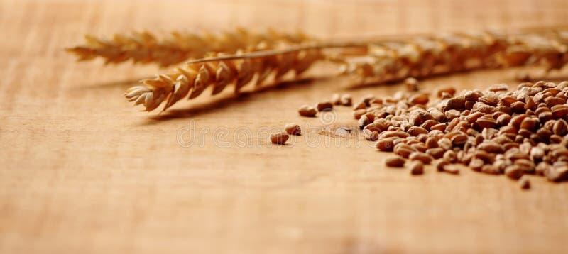 与玉米关闭的麦子峰值 免版税库存照片