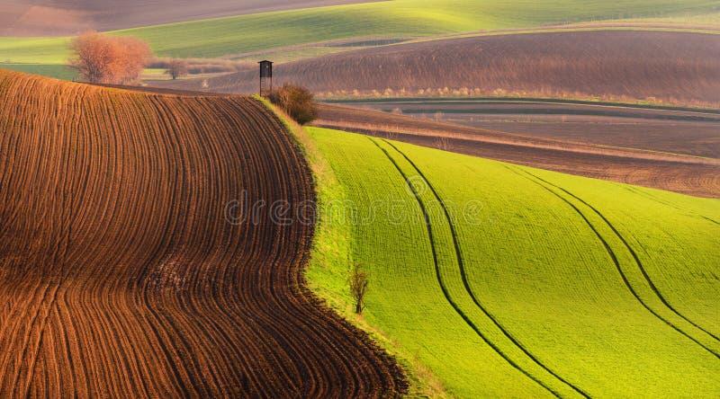 与玉米的绿色领域的多彩多姿的欧洲乡下春天风景,波浪布朗耕种了被犁的地球和狩猎塔 免版税库存图片