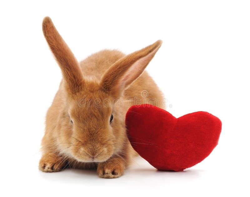 与玩具心脏的兔子 免版税库存图片