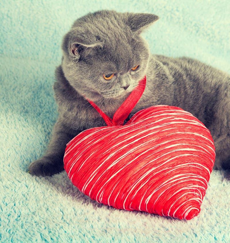与玩具心脏的猫 图库摄影