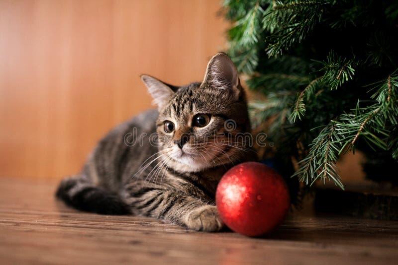 与玩具的圣诞节猫 免版税库存图片